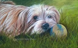dog portrait Norfolk terrier pastel