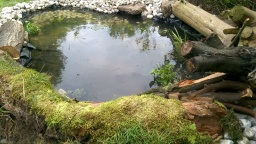 New wildlife pond for a client [May 2017]