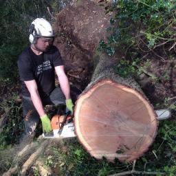 Tree Pruning in Somerset