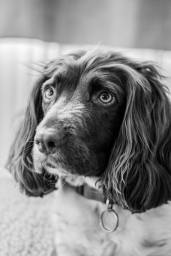 Pet Portraits Photography