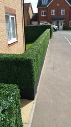 artificial hedge showroom