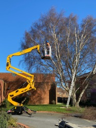 tree surgeons grimsby