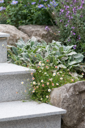 Steps softened with planting
