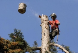 Tree Surgeons Slough