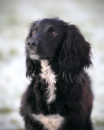 Dog portraits in Hull, Beverley & Yorkshire