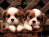 Little Tiddlers Pet Services