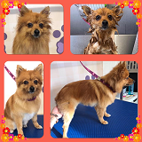 Ultimutt Pawfection Dog Grooming - small dog groom