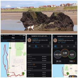 GPS tracked dog walking services as standard