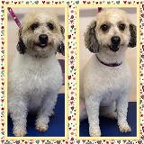 Ultimutt Pawfection Dog Grooming -medium dog groom