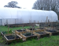 Scaffolding Boards Raised Beds Horticulture