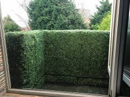 artificial hedge privacy screening