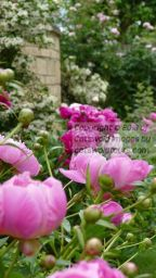 Beautiful Old Cotswold Cottage Garden