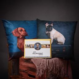 Surrey Dog Photographer | Hound Dog Photography