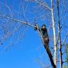 Jordan Tree Service