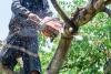 Middleboro Tree Service