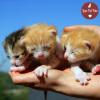 Love Pet Foto