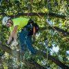Budget Tree Service Bentonville