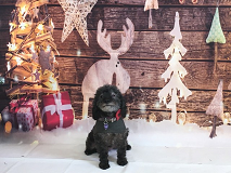 Ultimutt Pawfection Dog Grooming - Christmas