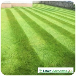 The Lawn Advocates - lawn care specilists