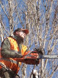 tree pruning wallingford