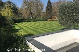 Medium Size Lawn