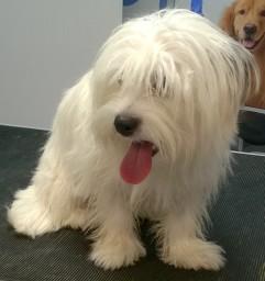 Dog Grooming Chorley