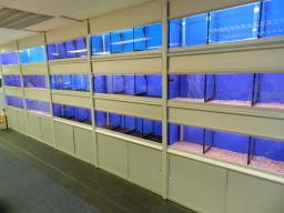 Banks of Fish Tanks Bristol