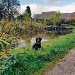 Puppy Training on Macclesfield Canal