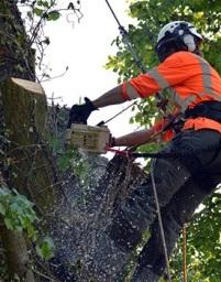 Colchester Tree Surveys