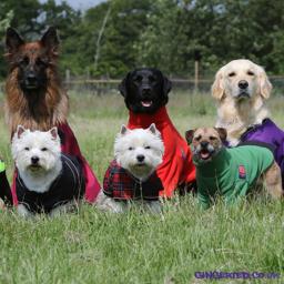 Ginger Ted Ltd Waterproof Dog Coats