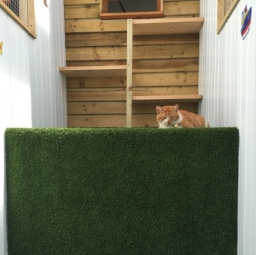 Cattery Outside