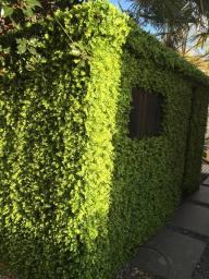 realistic artificial foliage