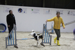 Dog agility at South West Dog Skills Centre