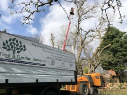 tree surgeon grimsby