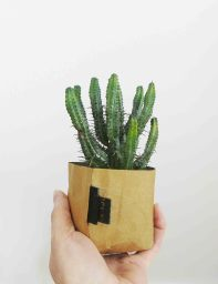 Creased Paper Planter | The Den & Now