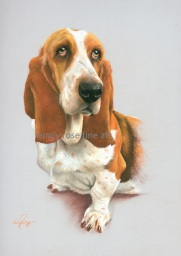 Basset Hound Dog Pet Portrait from Photo in Pastel