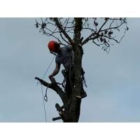 Alba Tree Care