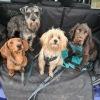 Kurious Tails Dog Walking & Pet Services
