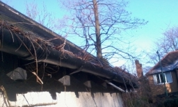 Creeper plants can cause all kinds of gutter blockage and problems for your home .