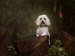 Karen Riches Pet Photographer Leyland Lancashire