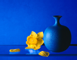 Daffodil with blue vase