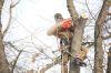 J&L Tree Service