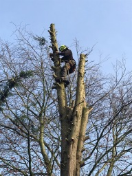 Lumbers Tree & Hedge Care / Tree Surgeon Wirral