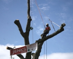 Tree Surgery Slough