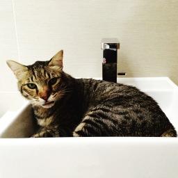 Cat Sitter Highgate