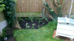 Shade border, newly planted for a client.