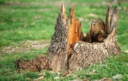 tree stump removal quotes