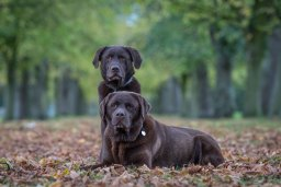Private Dog Photography Sessions