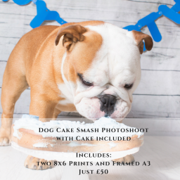 Dog Cake Smash Photoshoot - Framed A3 and Two 8x6