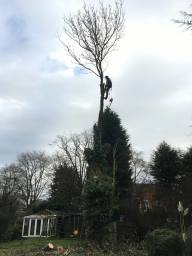 Tree surgeon halesowen